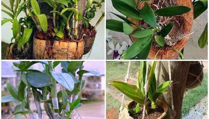 Orquídeas em Cocos