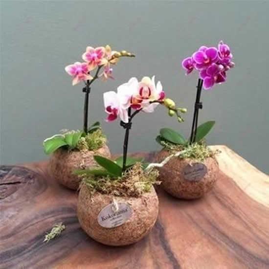Orquídeas em coco