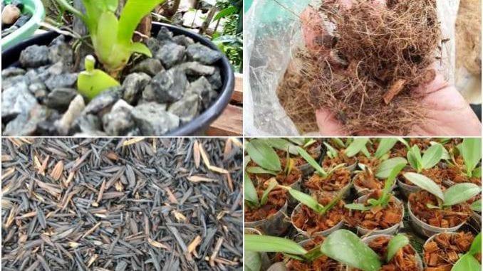 Substratos para Orquídeas