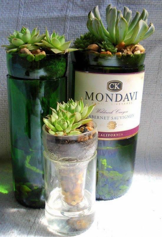 Mini suculentas em garrafas