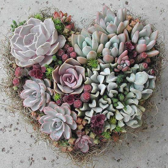 Decore com plantas mini suculentas