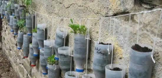 Reutilizar garrafas PET para fazer hortas orgânicas em casa