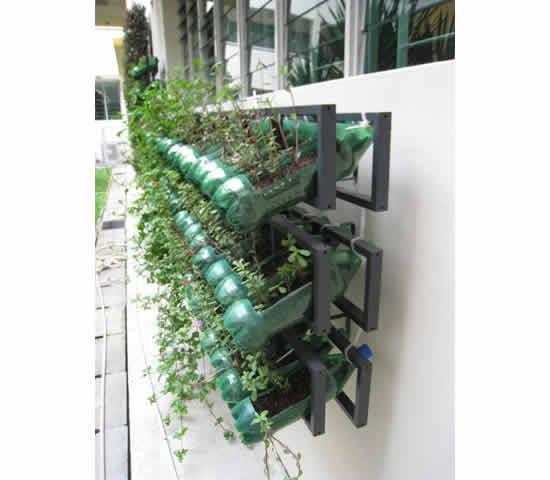 Veja como fazer horta com garrafa PET