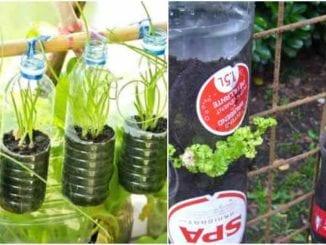 Como fazer horta vertical com garrafa PET