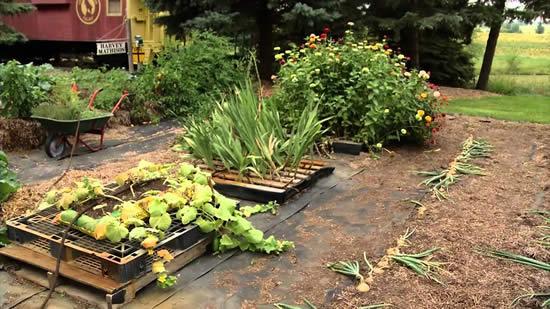 Ideias criativas para fazer horta com pallets