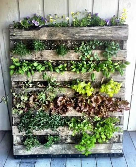 Utilize pallets para fazer hortas caseiras