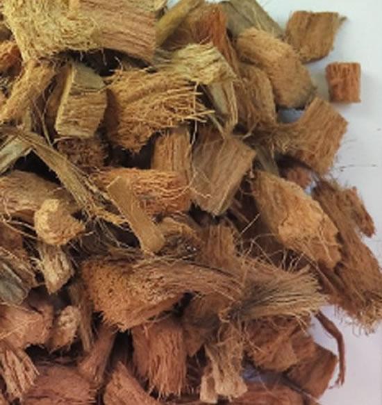 Substrato para orquídea: chips de coco