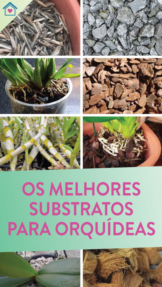 Os melhores substratos para orquídeas