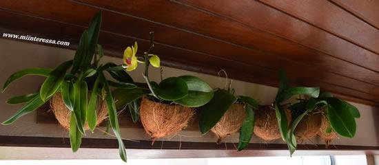 Como plantar uma linda orquídea em coco