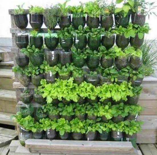 Horta caseira com garrafa PET