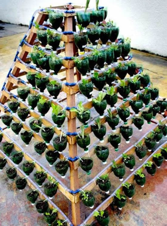 Horta com garrafa plástica