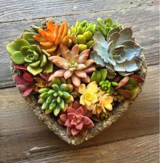 Plante mini suculentas de maneira criativa