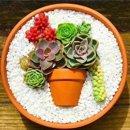 Linda ideia para plantar mini suculenta