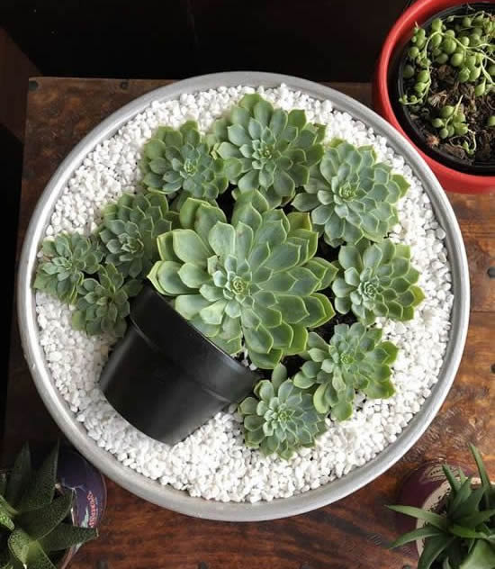 Ideias para plantar suculentas