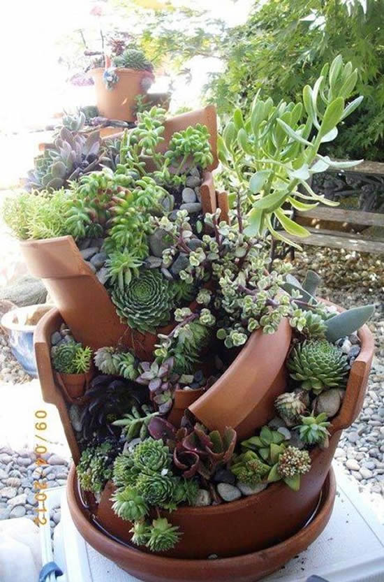 Mini jardim com mini suculentas