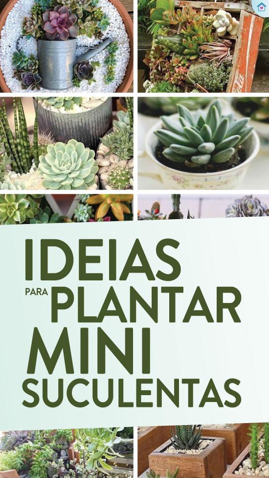 20 ideias para plantar mini suculentas