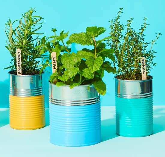 Horta orgânica com latas