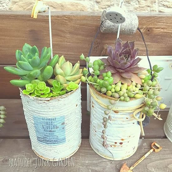 Mini suculentas plantadas em latas