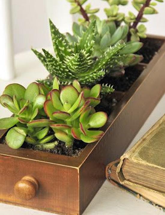 Como plantar suculentas em gavetas velhas