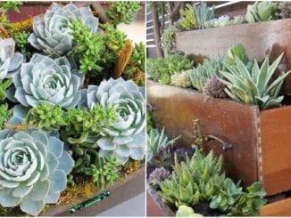 Ideias para plantar suculentas em gavetas velhas