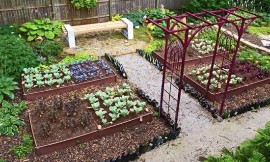 Dicas para fazer horta caseira