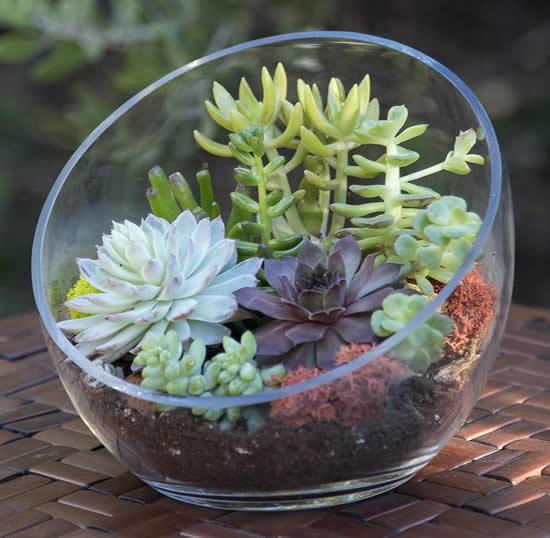 Lindo terrário com suculentas em vidro
