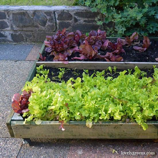 Lindas dicas e ideias para fazer horta com pallets