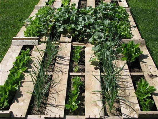 Pallets para fazer horta orgânica