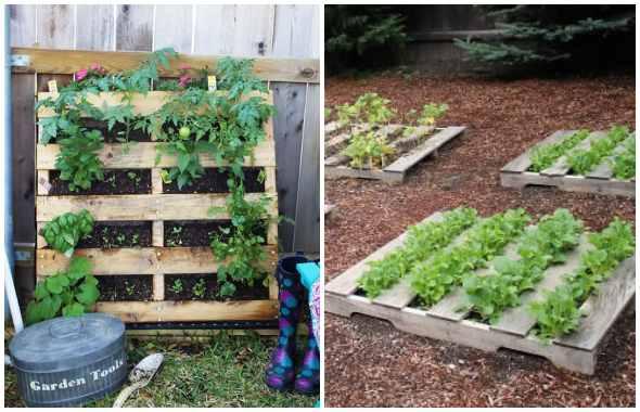Ideias de horta caseira com pallets