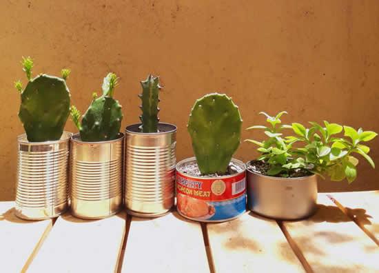 Dicas para plantar cactos em vasos feitos de latas