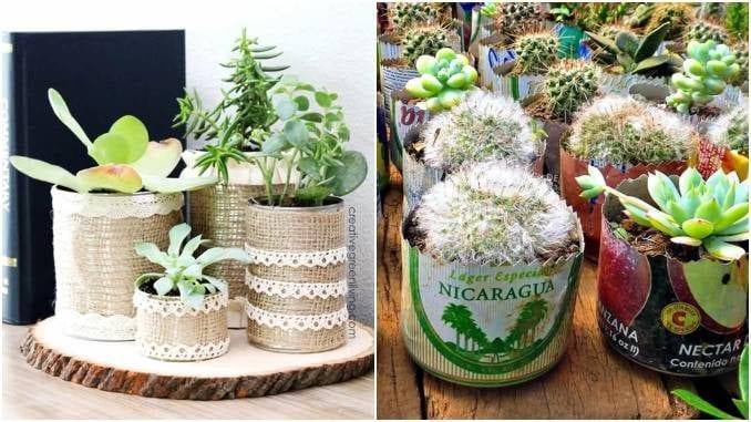 Ideias maravilhosas para plantar suculentas em latas