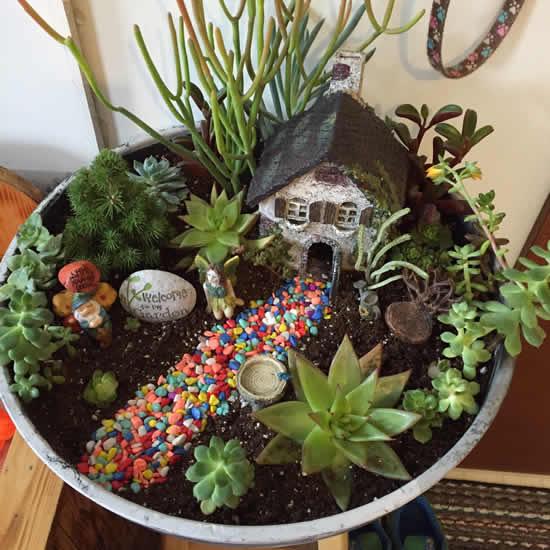 Cactos e suculentas para fazer mini jardins