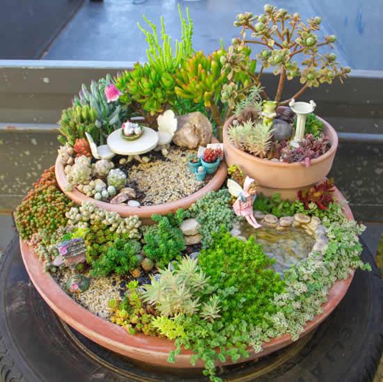 Lindo mini jardim com cactos e suculentas