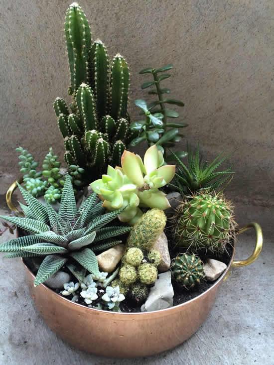 Mini jardim para decoração com cactos e suculentas