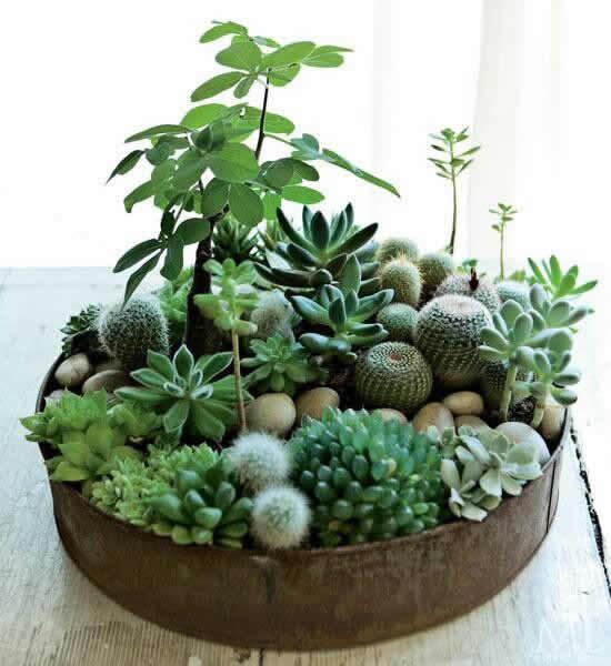 Mini jardim para decoração
