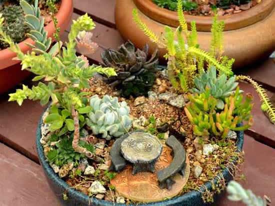 Mini jardim com cactos e suculentas para inspiração