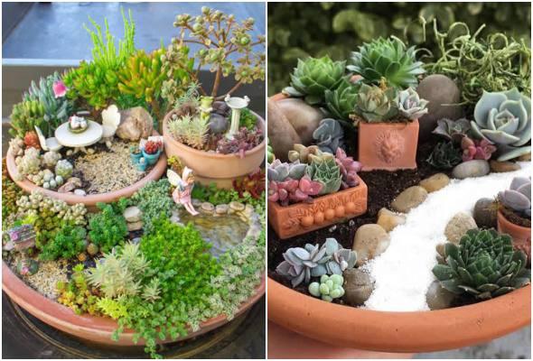 Mini jardim com cactos e suculentas