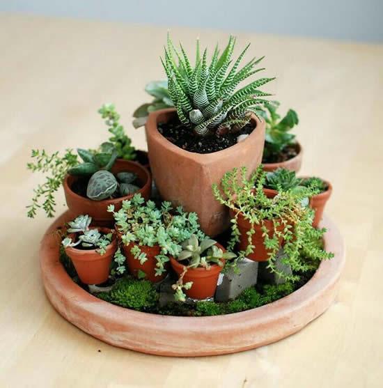 Lindo mini jardim com suculentas e cactos