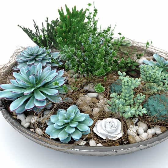 Mini jardim com suculentas e cactos