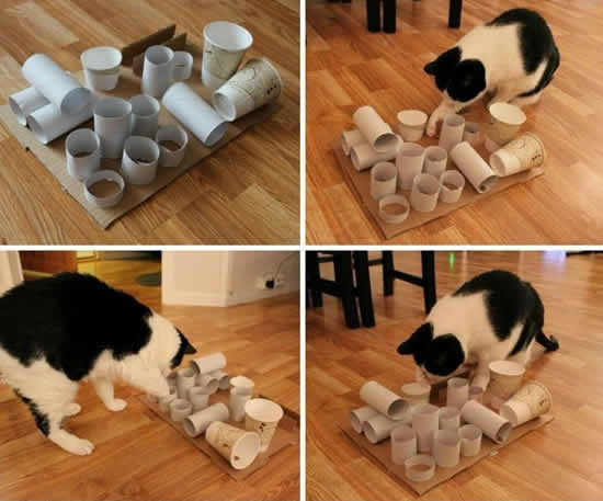 Brinquedo com rolos de papelão para gatos