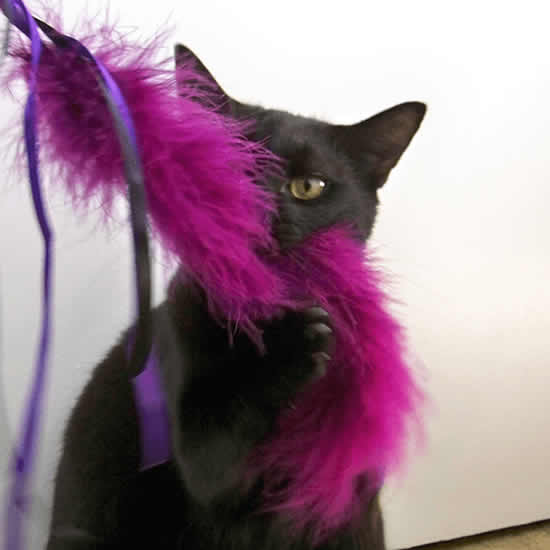 Lindos brinquedos para gatos