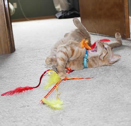 Brinquedo para gatos com penas