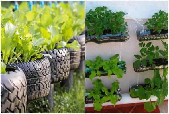 Horta com vasos reciclados