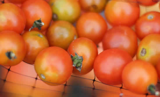 Máscara com tomates