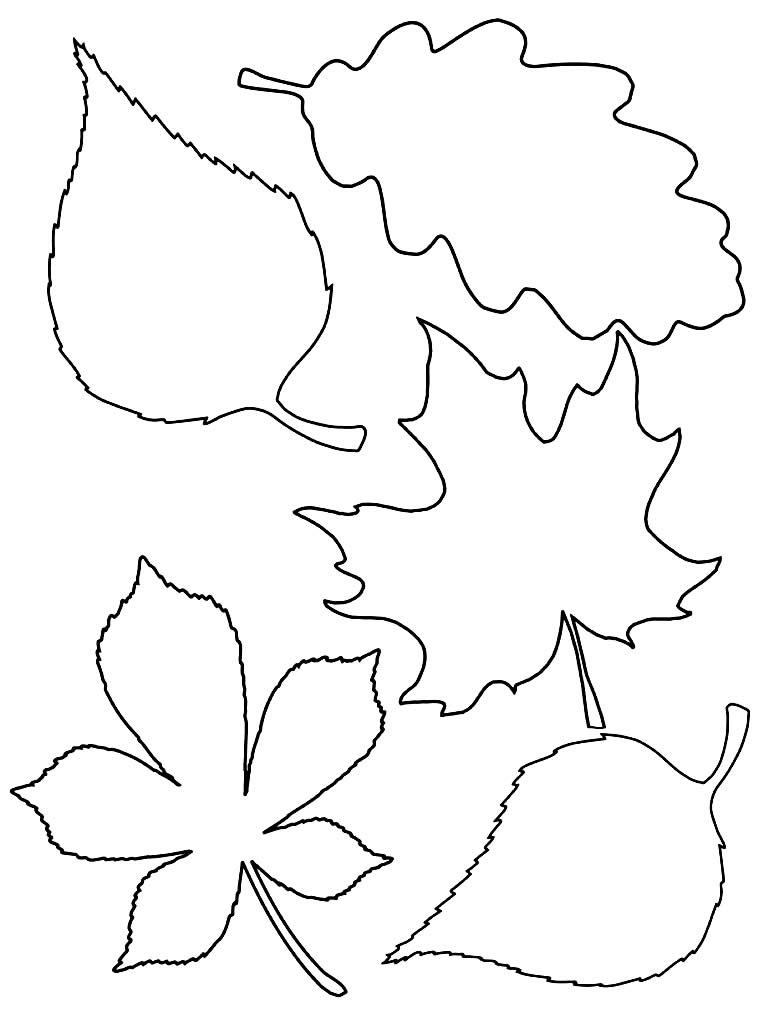 Moldes de folhas