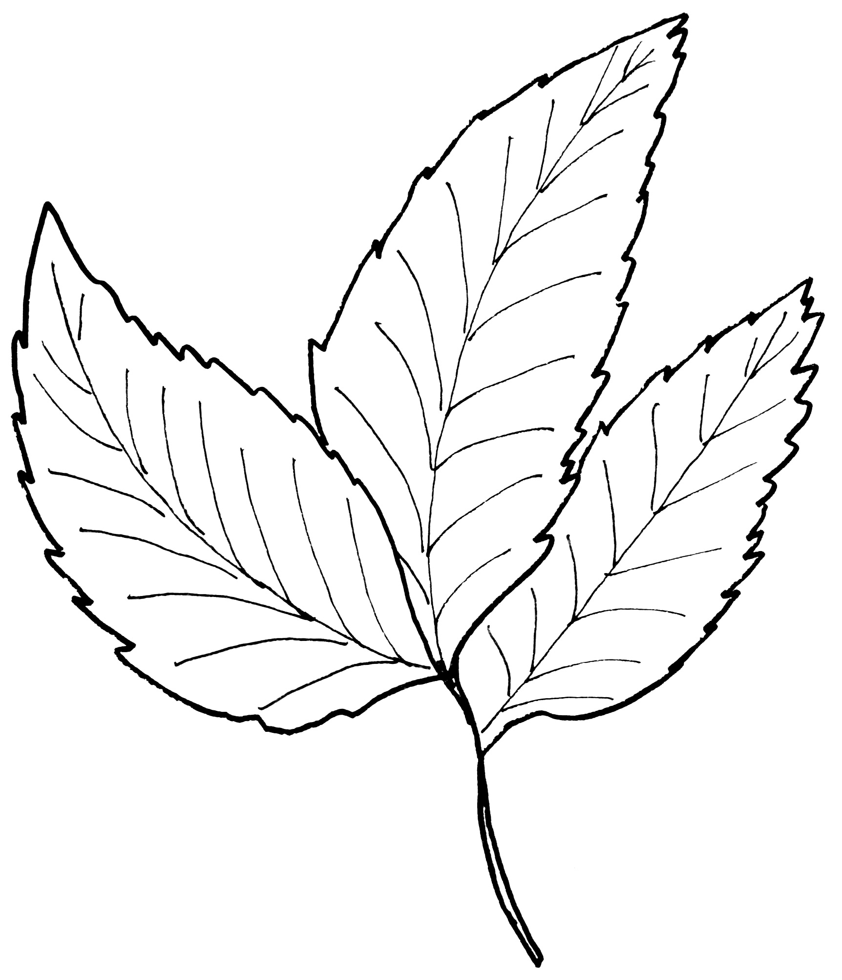 Molde de folha
