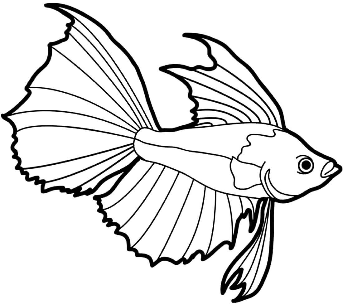 Desenho de Peixe Beta para colorir