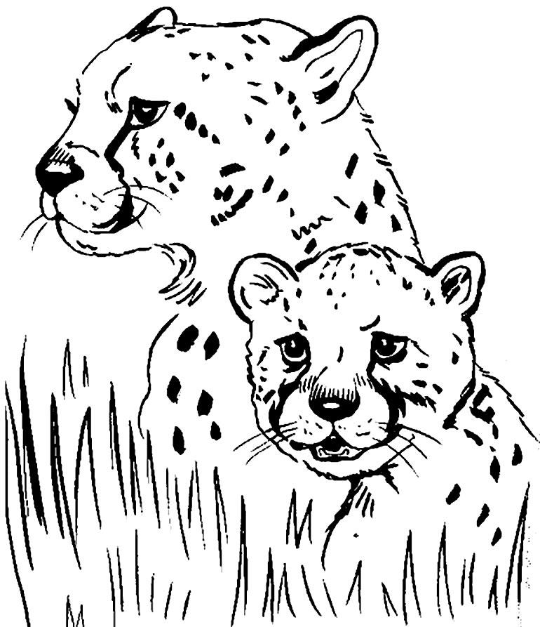 Desenho de onça pintada