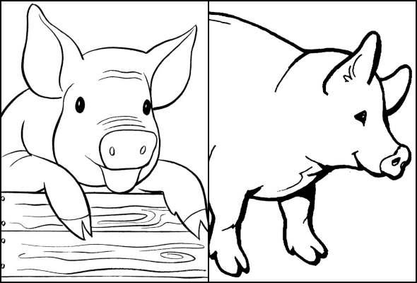 Desenhos de porquinhos para colorir