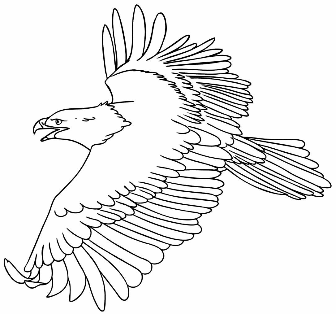 Desenho de Águia para imprimir e colorir